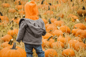 pumpkin patches in houston