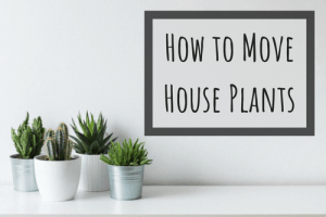 how to move house plants