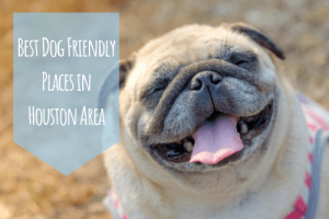 dog friendly places in houston